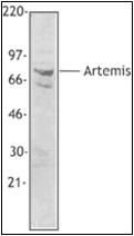AP23019PU-N - Artemis