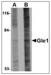 AP23008PU-N - GLE1 / GLE1L