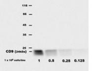 AM26023AC-N - CD9