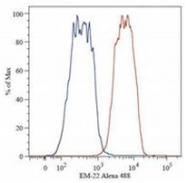 AM26027PU-N - Catenin beta-1