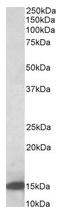 AP23676PU-N - Galectin-1