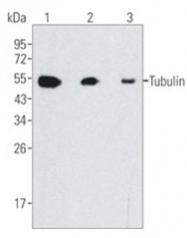 AM20679PU-N - TUBB / TUBB5
