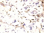 AP23332PU-N - CD225 / IFITM1