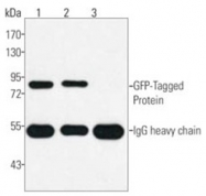 AM20782PU-S - GFP