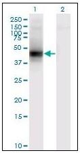 AM20879PU-N - Decorin