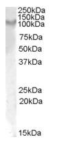 AP23685PU-N - CD217 / IL17RA