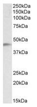 AP23754PU-N - NDRG2
