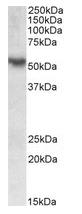 AP23758PU-N - ROR-gamma / RORC