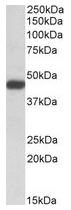 AP23760PU-N - SDF4 / CAB45