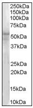 AP23599PU-N - IRAK4