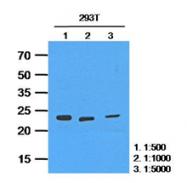 AM09392PU-N - HPRT1 / HPRT