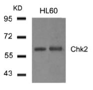 AP26045PU-N - CHK2