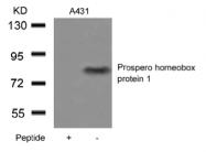 AP26049PU-S - PROX-1