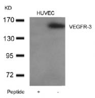 AP26050PU-N - VEGFR-3 / Flt-4
