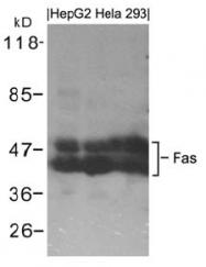AP26059PU-S - CD95 / FAS