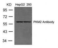 AP26067PU-S - PKM2