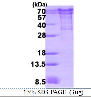 AR09204PU-L - Chromogranin A