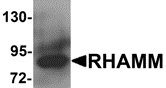 AP26103PU-N - CD168 / HMMR