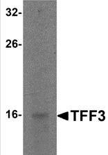 AP26079PU-N - Trefoil factor 3 / TFF3