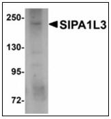 AP23920PU-N - SIPA1L3