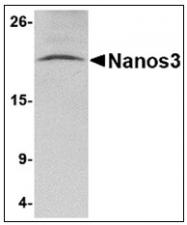 AP23854PU-N - NANOS3
