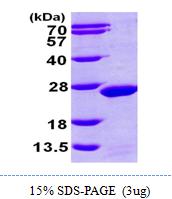AR09763PU-L - MDP1