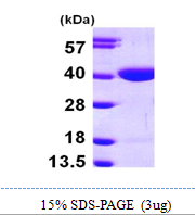 AR09767PU-L - Ribokinase / RBKS