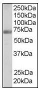 AP23820PU-N - Formin-binding protein 1