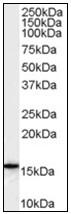 AP23824PU-N - ALOX5AP / FLAP