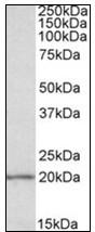 AP23834PU-N - EIF5A1