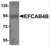 AP26301PU-N - EFCAB4B