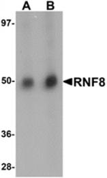 AP26208PU-N - RNF8