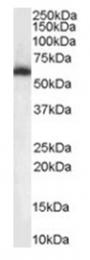 AP16488PU-N - NONO / NMT55