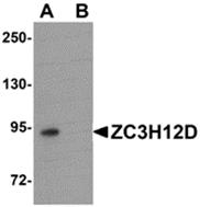 AP26202PU-N - ZC3H12D