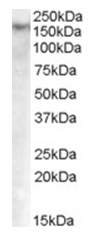 AP16829PU-N - DNMT1