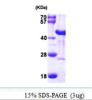 AR09799PU-N - DNAJB6