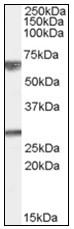 AP22485PU-N - GPSM2