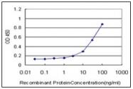 AM31018PU-N - Synaptotagmin-1