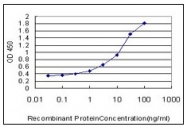 AM31075PU-N - Prohibitin / PHB