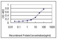 AM31096PU-N - CCT5 / TCP1 epsilon