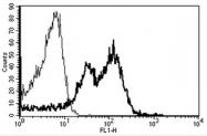 AM31183AF-N - CD29 / Integrin beta-1