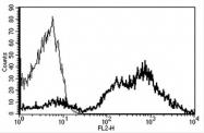 AM31183RP-N - CD29 / Integrin beta-1