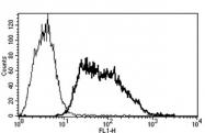 AM31189AF-N - CD62E / E-Selectin