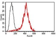 AM31210RP-N - Perforin 1 / PRF1