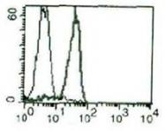 AM03022PP-N - CD138 / Syndecan-1