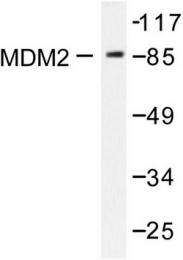 AP06434PU-N - MDM2
