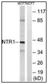 AP31172PU-N - Neurotensin receptor  1