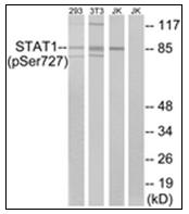 AP31321PU-N - STAT1