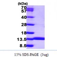 AR09868PU-L - Acylphosphatase 1 (ACYP1)