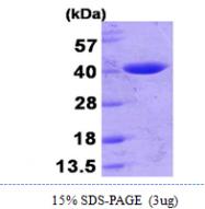 AR09882PU-L - Beta-lactamase